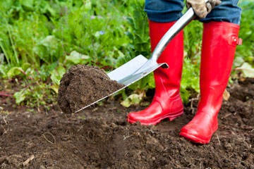 Elegant At Home Soil Testing Methods