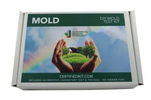 Mold Front